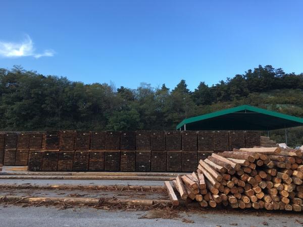 161010-山林組合中央会木材流通センター (4)