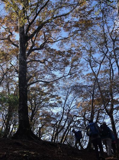 ブナの森を登る