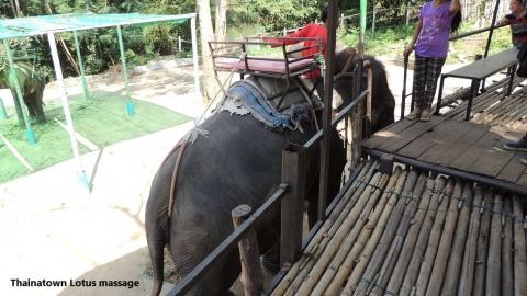 Wangpo Elephant Camp