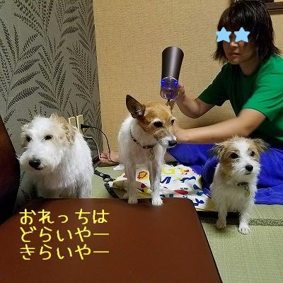 2016_09_22_206.jpg