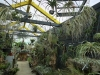 珍しい植物2