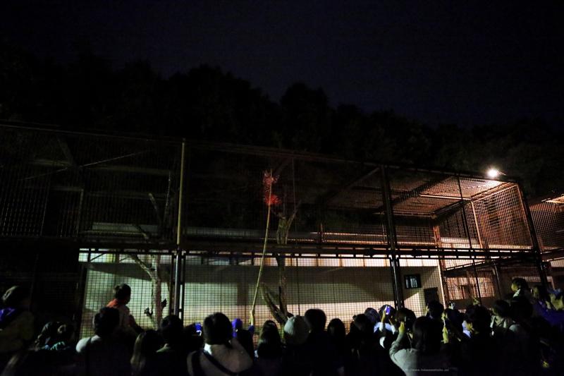 ヒョウのガイドイベント (夜の動物園)