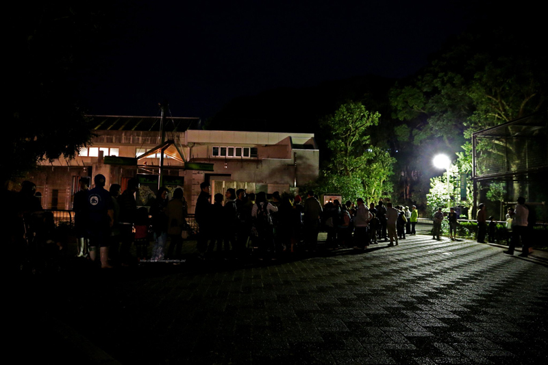 アフリカゾウのシークレットイベント (夜の動物園)