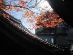 円満寺の紅葉20161126