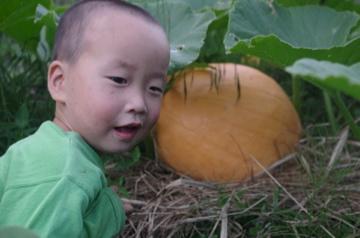 巨大かぼちゃ