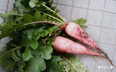 チビとこ農園野菜