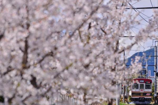 2016年4月11日 上田電鉄別所線 三好町~赤坂上 1000系1003編成