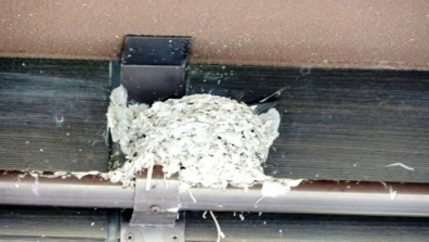 新東名の藤枝パーキングエリア上り線の店舗屋根にツバメの巣がありツバメも巣にいる写真