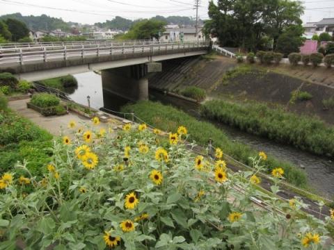 馬喰橋と逆川