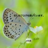 roundphoto