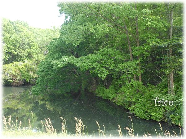 160426-亀の池