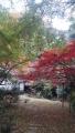 鎌倉の紅葉 20161127