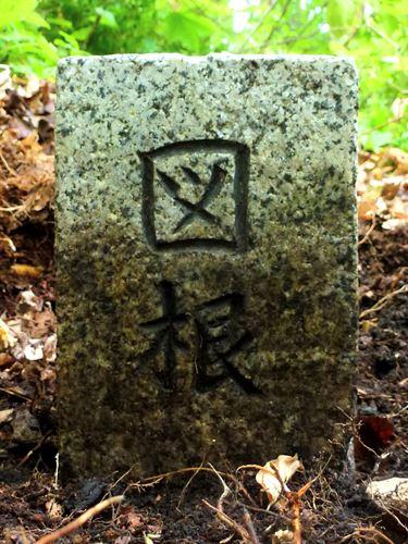 koyamori_z4.jpg
