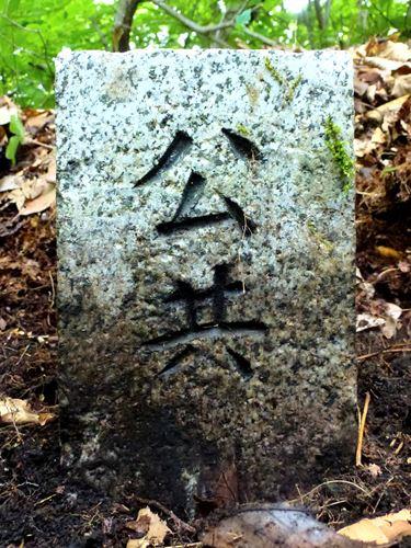 koyamori_z5.jpg
