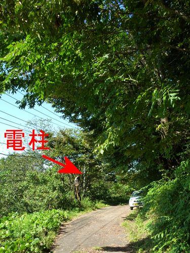muratanumabe_m5.jpg