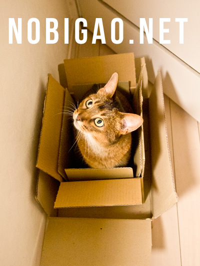 Nobigao アビシニアン 猫