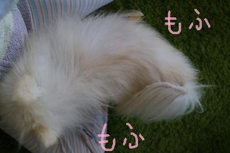 s-IMG_2683.jpg