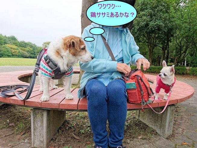 2016長岡公園0369