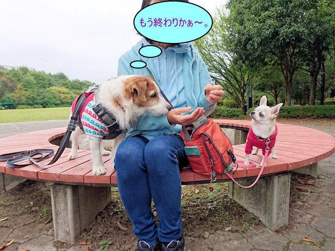 2016長岡公園0372