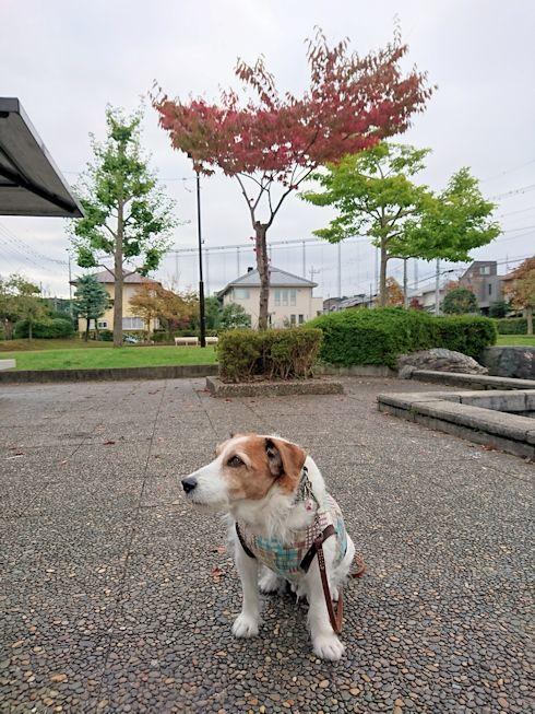 2016散歩138