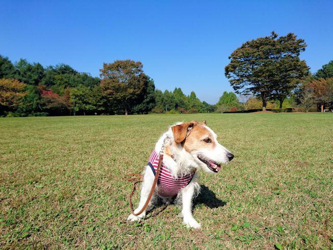 2016長岡公園0376