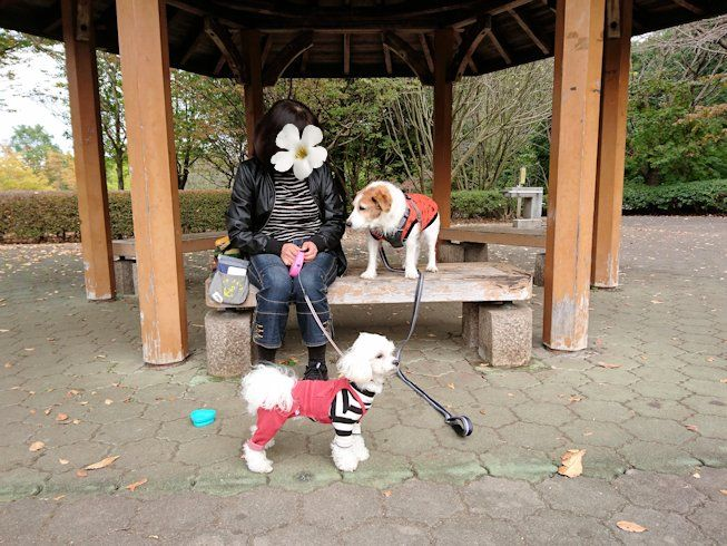 2016長岡公園0390
