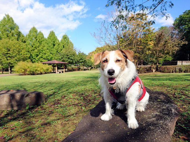 2016長岡公園0396