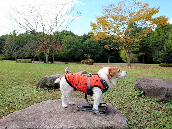 2016長岡公園0409