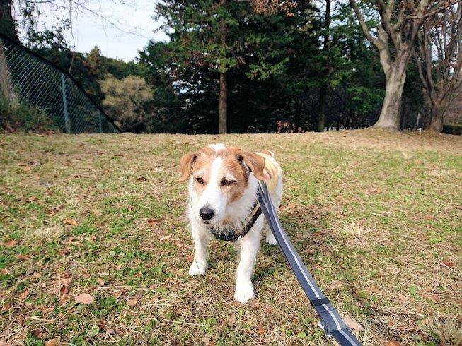 2016散歩157