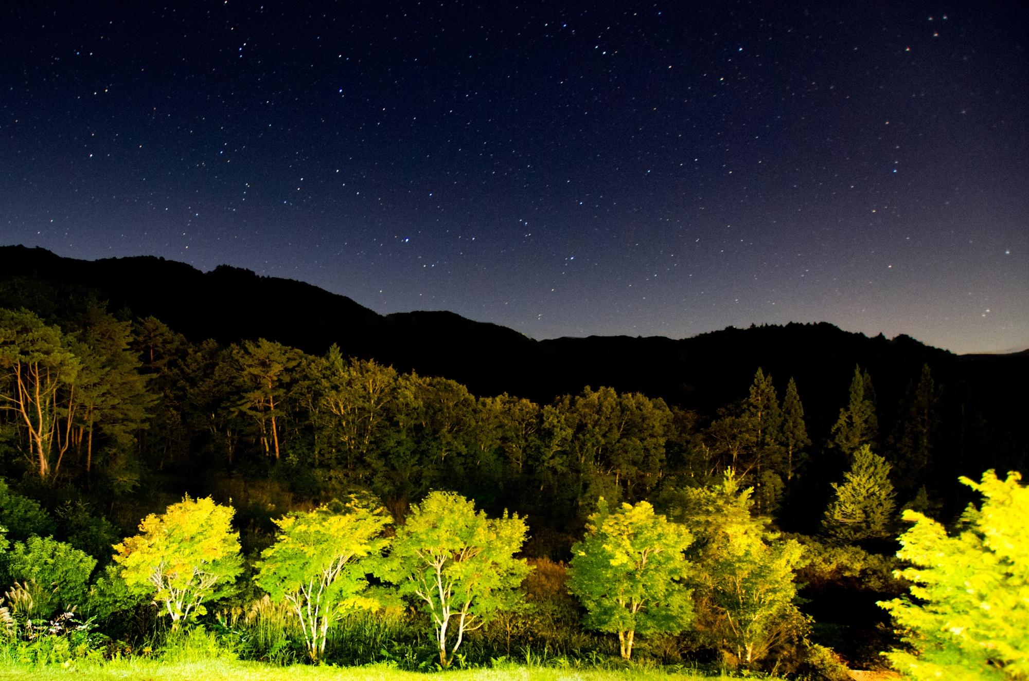 南木曽・富貴の森3