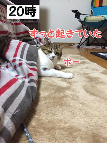 S_5338723221219.jpg