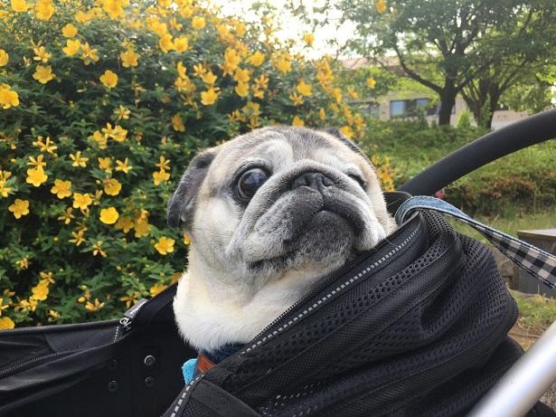 なんだか分からない黄色いお花も満開
