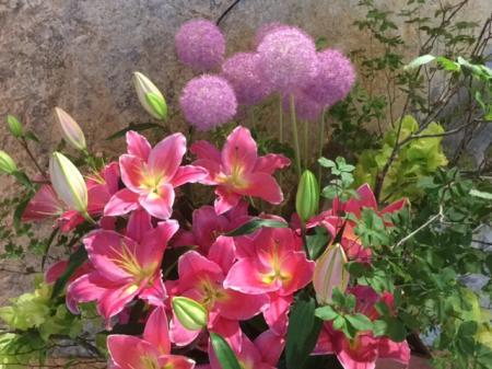 S20160711ペニンシュラの花
