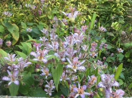 S20161014鎌倉の花