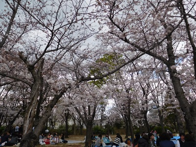 大阪城花見会6