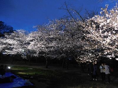 大阪城花見会9
