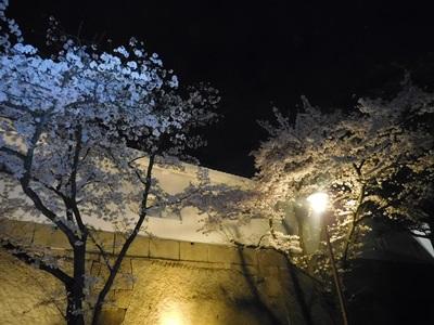 大阪城花見会10