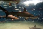 3.葛西臨海水族園-11D 1609q