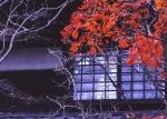 5.紅葉-03Pt