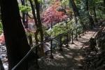 1.芝公園:もみじ谷-06D 1612q