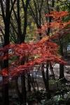3.芝公園:もみじ谷-11D 1612q