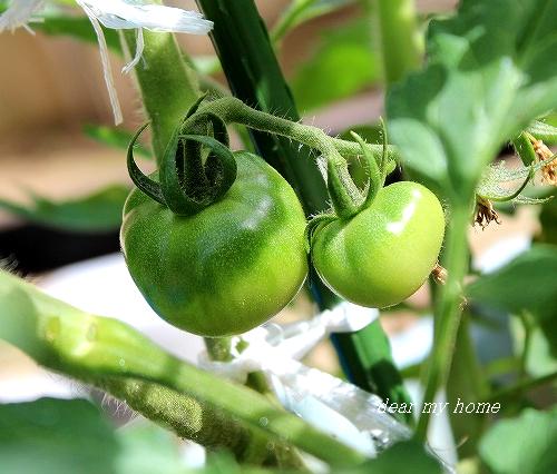 爺ファームトマト