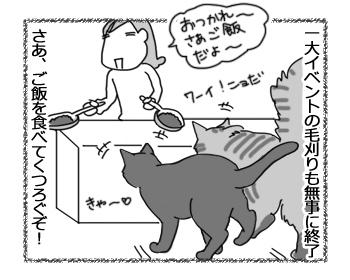 01112016_cat2.jpg