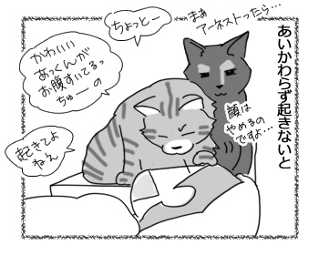06122016_cat2.jpg