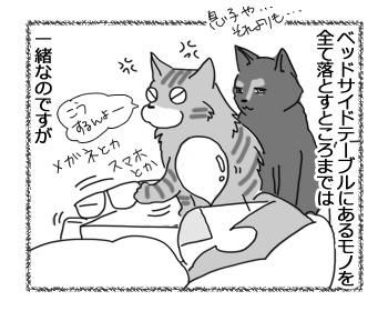 06122016_cat3.jpg