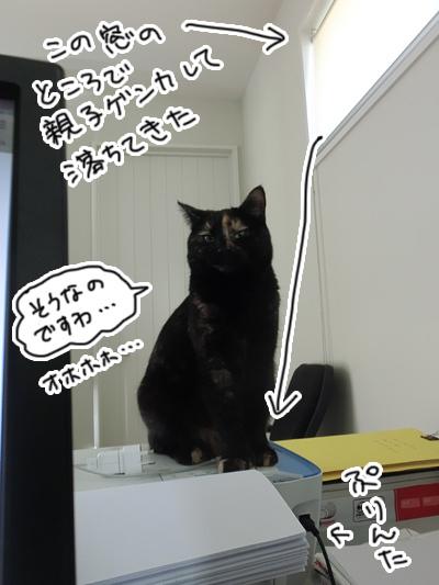 09122016_cat5.jpg