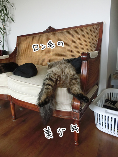 10112016_cat3.jpg
