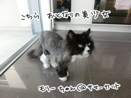 10112016_cat4.jpg