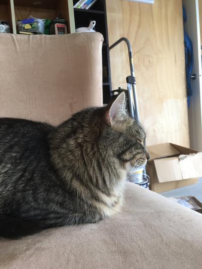 16112016_cat2.jpg