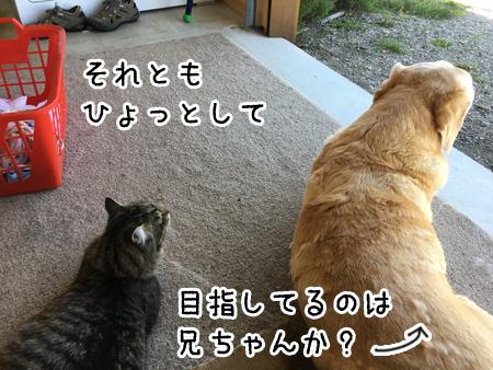 19112016_cat3.jpg